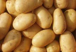 冷藏一档新鲜马铃薯,麻袋
