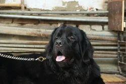 Dog Obediance Training