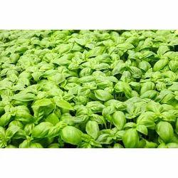 Natural Herbal Seed