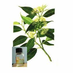 Eucalyptus Citrodora Oil