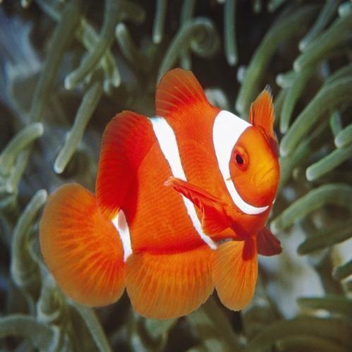 Ornamental Fish In Howrah Latest Price Mandi Rates From Dealers In Howrah