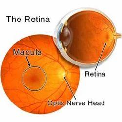 Retina Clinic Service