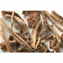 Bharangi / Clerodendrum Serratum/beetle killer