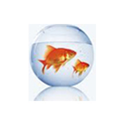 glass fish bowl in delhi latest price and mandi rates from dealers