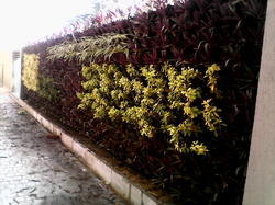 Bio Wall