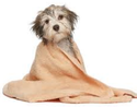Grooming Pets Treatment
