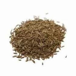 Cumin Seeds - Jeera Wholesaler & Wholesale Dealers in India