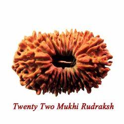 Twenty Two Mukhi Rudraksha
