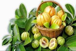 Garcinia Cambogia In Hyderabad Telangana Get Latest Price From