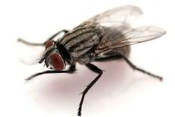 Fly Treatment Services