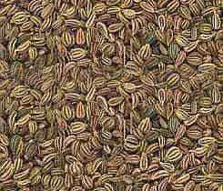 Ajwain in Delhi, अजवायन, दिल्ली, Delhi | Get Latest Price ... Carom Seed