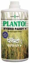 Planto Hybrid Paddy