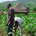 Agricultural Project Consultancy Services