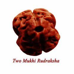 Two Mukhi Rudraksha