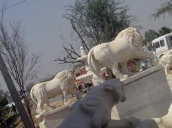 White Marble Lion in Rolling Bol