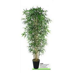 Indoor Bamboo Tree