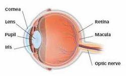Retina & Vitreous Services
