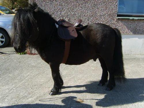 12inch Leather Pony Saddle