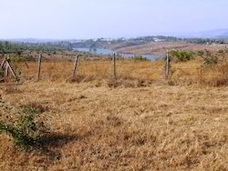 Agricultural Plots