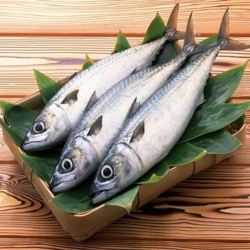 Fresh Fish - Wholesale Price for Fresh Fish in India
