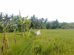 Land For Rental