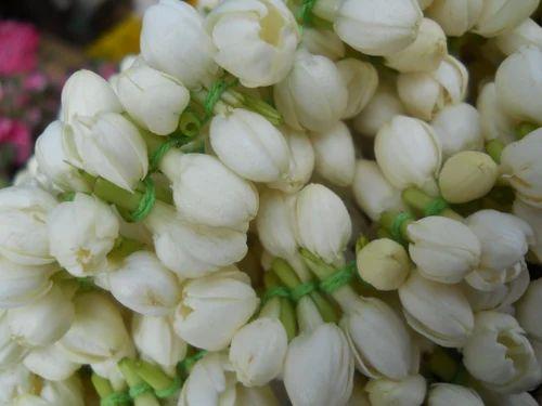 Jasmine Flowers Loose Jasmine Flowers Exporter from Coimbatore