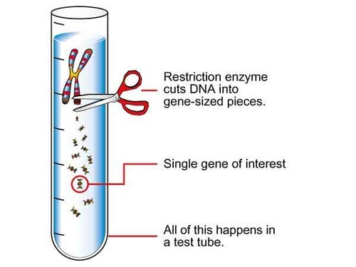 restriction enzymes view specifications details by orange