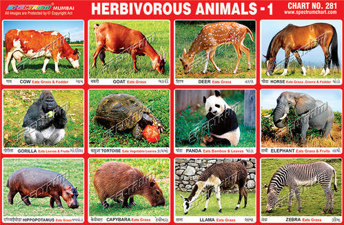 Herbivore Animals List