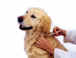 Vaccination Pets Treatment