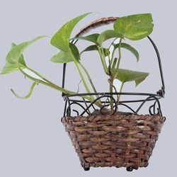 Round Hanging Cane Planter Basket