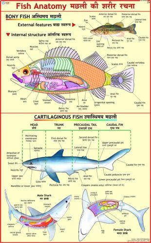 Fish Anatomy Science Charts Zoology Charts Vidya Chitr Prakashan