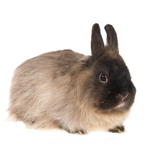 Breed Rabbits - Wholesale Price for Live Rabbits in India