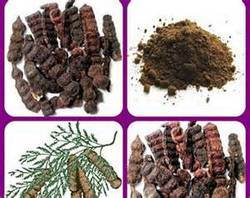 Shikakai Acacia Concinna Smaart Export Exporter In Tiruppur