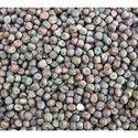 Pigeon Pea Seeds