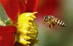 Honey Bee Treatment Services