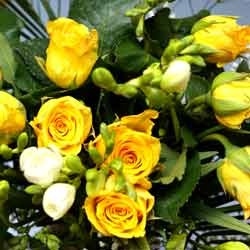 Fresh Yellow Roses