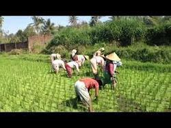 Sampurn Agri Ventures Private Limited, Chandigarh - Service
