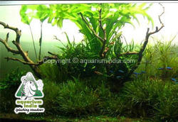 Marine Aquarium Garden Aquarium Manufacturer Retailer from Chennai