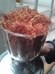Kashmiri Saffron at Best Price in IndiaKashmiri Saffron Price