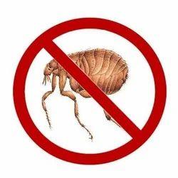Fleas Pest Control Services