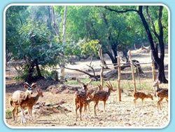 Ballavpur Wild Life Sanctury Tour