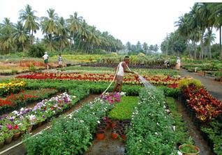 Nursery Plants Outdoor Whole Supplier From