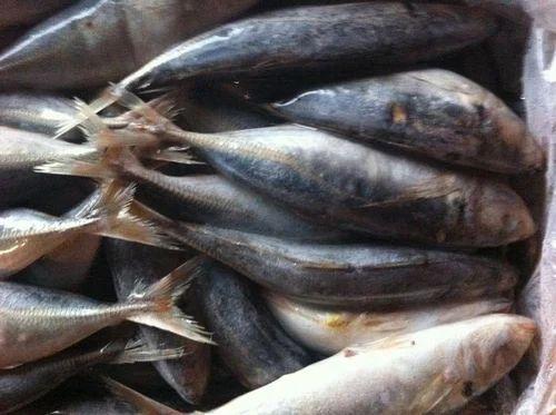 Frozen Shrimp Scad | Bhavanam Expo | Exporter, Service Provider