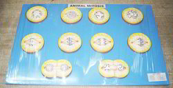 Animal Mitosis Model On Board