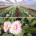 Agricultural-horticultural Projects