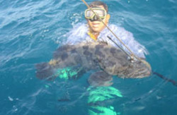 Spear Fishing Package Tour