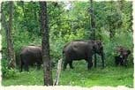 Wildlife Sanctuaries Activities