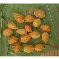 Prunus Armeniaca Seed