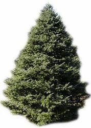Christmas Tree In India.Christmas Tree Christmas Tree Thaltej Ahmedabad Lush