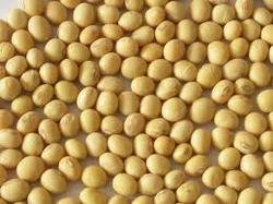 Yellow Soya Seed, Packaging Size: 30 Kg 50 Kg